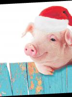 Что нам готовит год Свиньи?