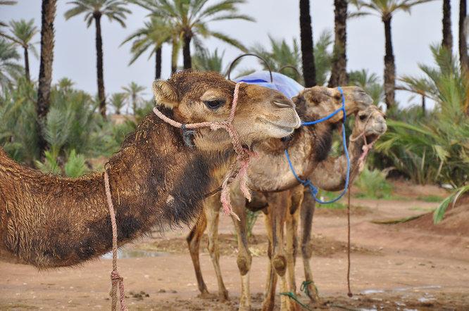 marokko_01